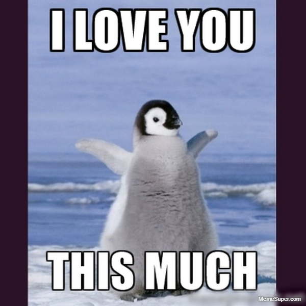 Friday Memes: Penguin I love you so much