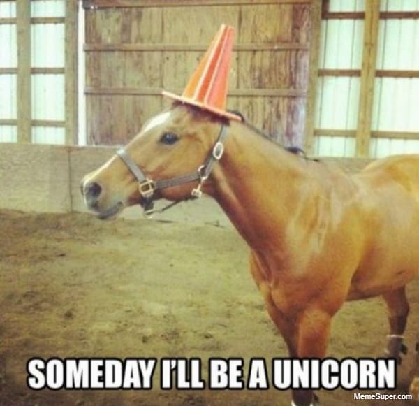 horse want to be a unicorn 618 1